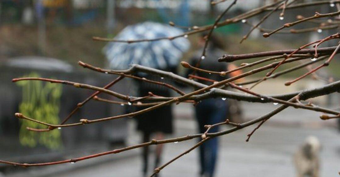 В Рязани похолодает до +4 градусов