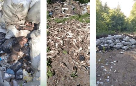 В нескольких местах под Рязанью обнаружены гниющие останки животных