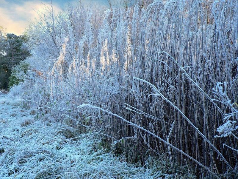 В ночь на понедельник в Рязанской области ожидаются заморозки