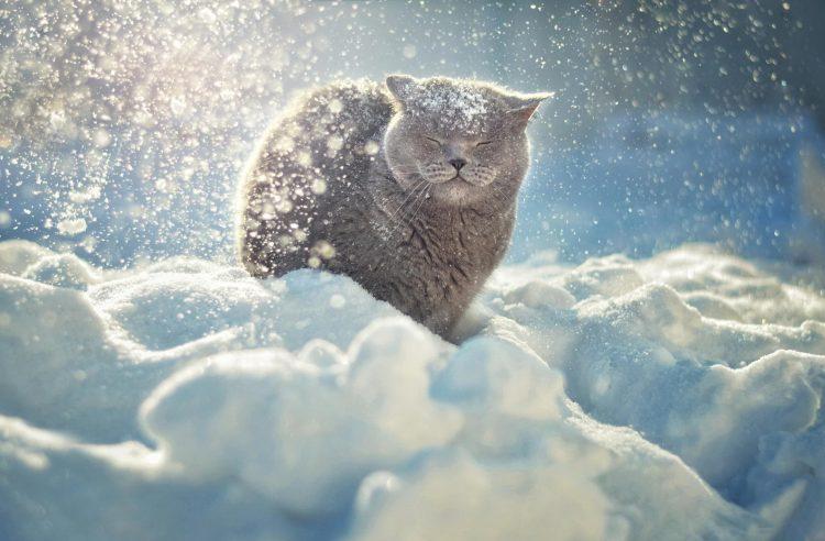 В четверг в Рязанской области ожидается -12 градусов